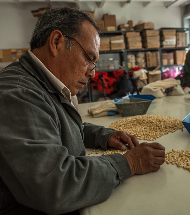 A CIMMYT technician counts maize seeds in the CIMMYT genebank.
