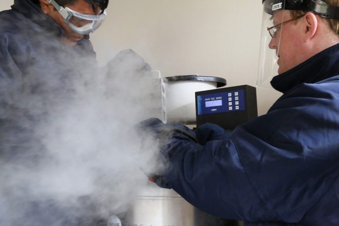 Cryopreservation at the CIP genebank in Lima, Peru.