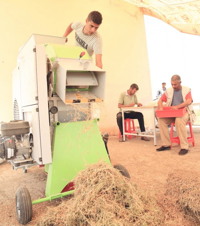 ICARDA's threshing machine in action in Marchouch, Morocco.