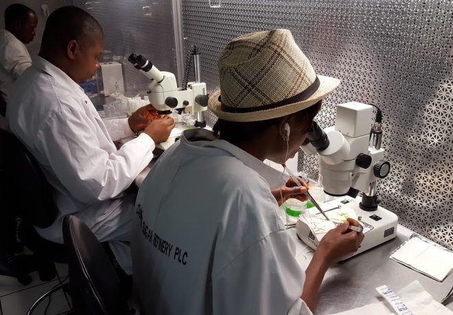IITA technician working in the in-vitro lab to propagate cassava accessions.