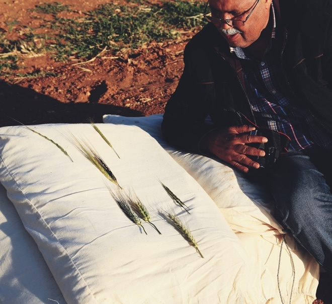 Ahmed Amri explaining varieties of Barley at ICARDA's research station in Terbol, Lebanon. Credit: Shawn Landersz